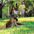 south-australia_image28